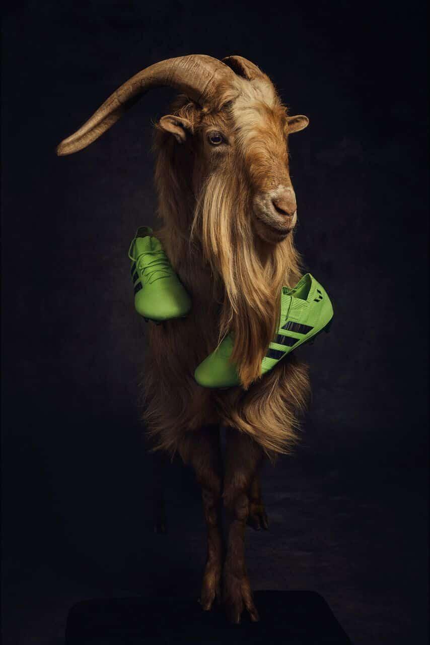 chaussures-football-adidas-nemeziz-messi-GOAT-chèvre-mai-2018-5
